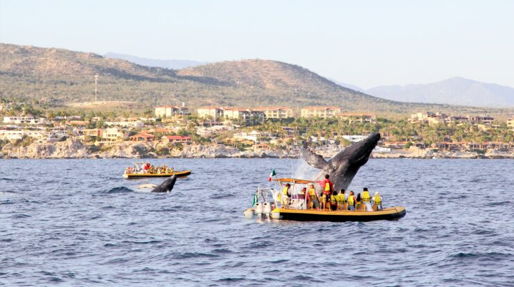 Humpback Whale Watching Tour in Cabo San Lucas
